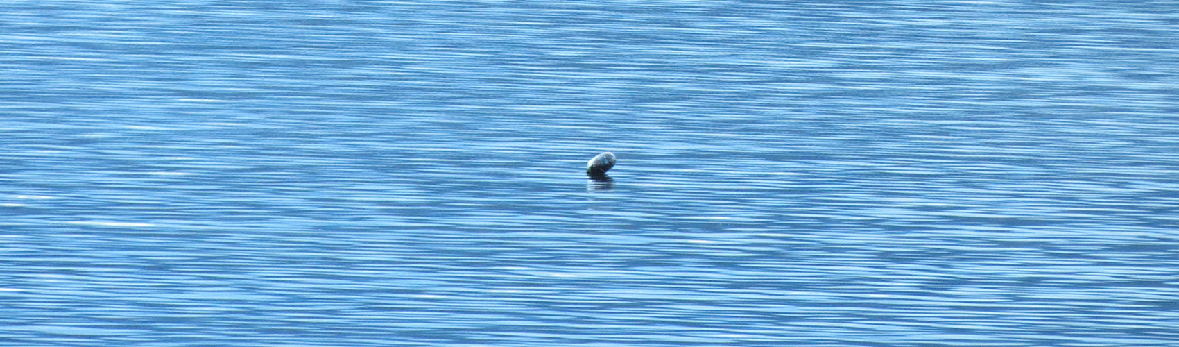 Ogopogo picture taken on May 24, 2015 - number three in series of 4